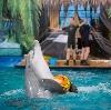 Дельфинарии, океанариумы в Реутове